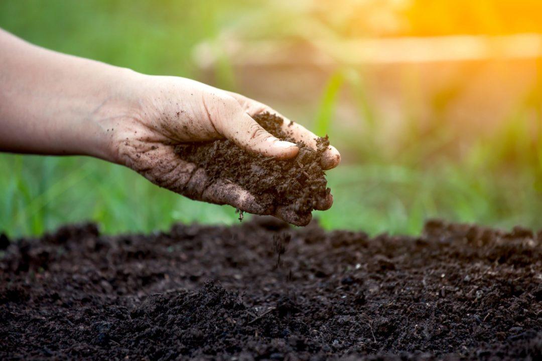 Main humaine jugeant de la bonne qualité de la terre d'un terrain