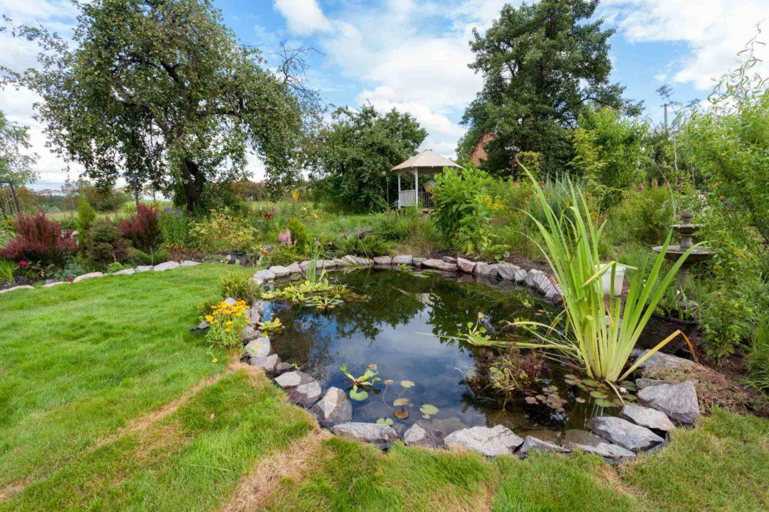 Bassin à poisson aménagé dans un jardin