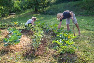 Un homme et une femme travaillent dans un jardin potager