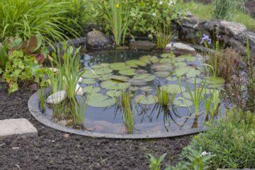 Bassin à poisson dans un jardin