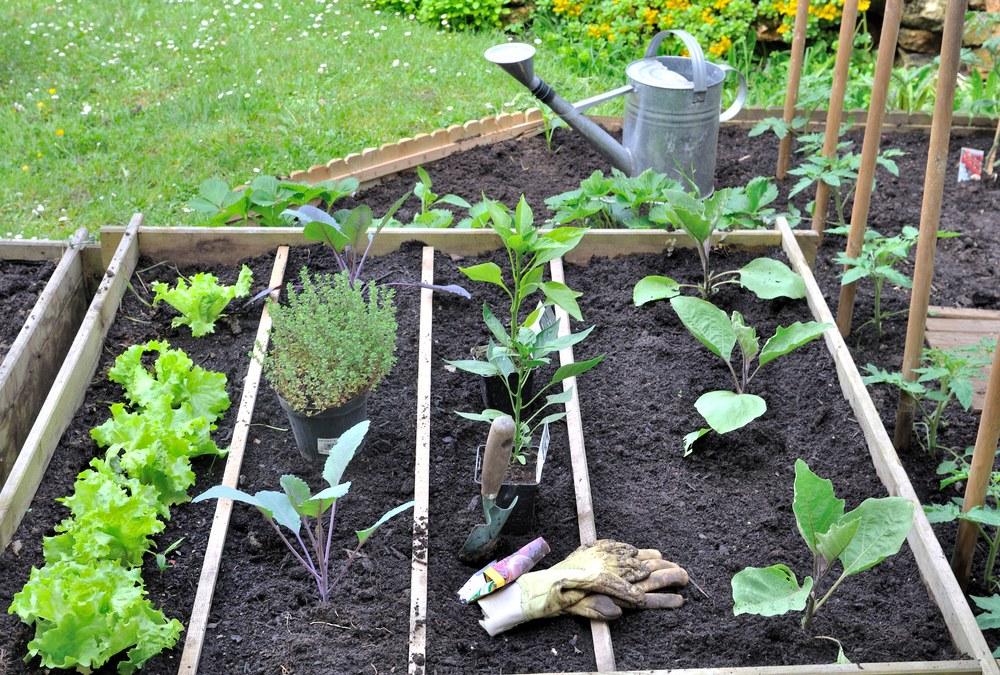 Potager dans un jardin