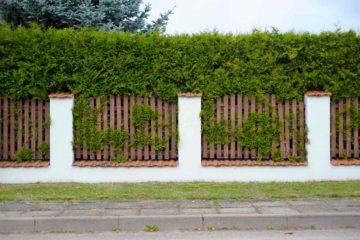Clôture de maison composée de barrière en bois eu de haut thuyas