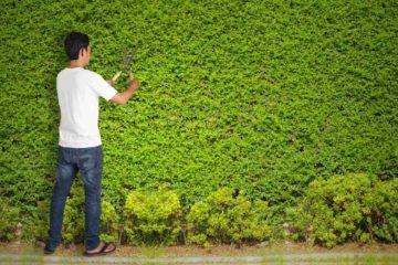 Paysagiste jardinier élaguant une clôture végétale