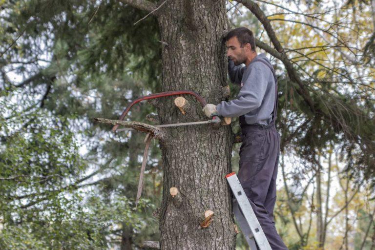 Paysagiste juché sur un arbre pour l'élagage