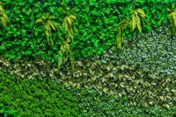 Mur composé de différents végétaux