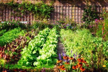 Un jardin potager bien organisé
