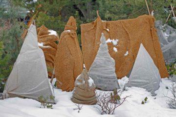 Arbres et arbustes du jardin protégés pour l'hiver