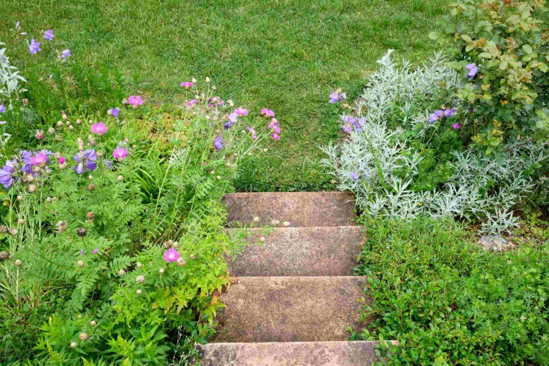 Ancien escalier en béton dan sun jardin