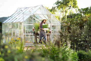 Serre installée dans un jardin pour entreposer fleurs ou pour l'hivernage
