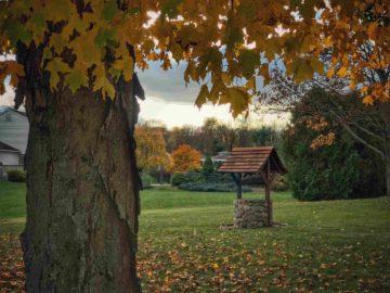 Un puits à l'ancienne dans un grand jardin
