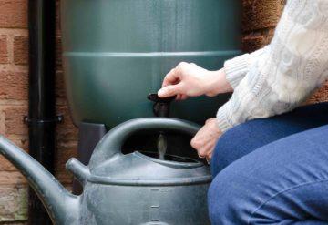 Une femme récupère de l'eau de pluie dans un arrosoir