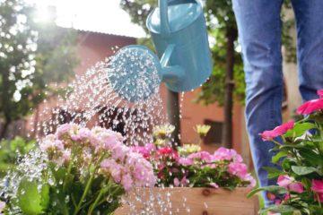 Un jardinier arrose ses fleurs dans un jardin en été