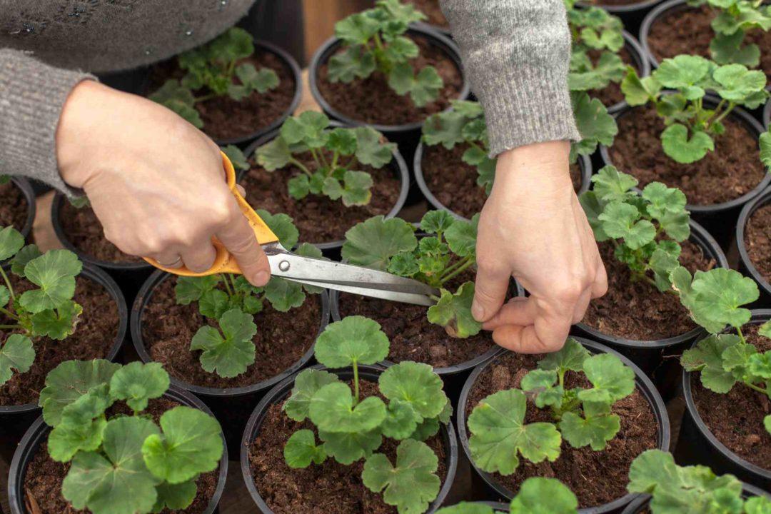 Jardinier faisant des plnatations avec de jeunes plants