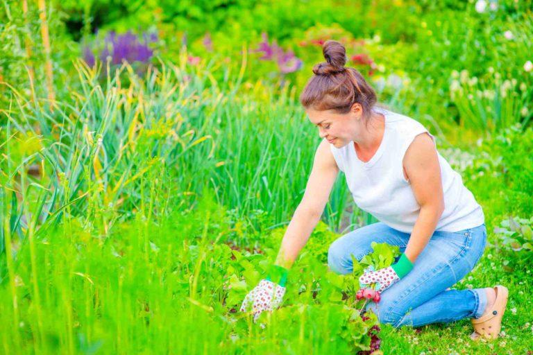 Une femme entretien son jardin et cueille des radis
