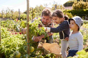 Un père et ses enfants dans le jardin potager