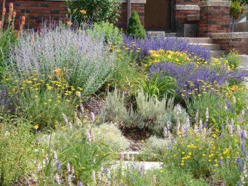 Un jardin avec des plantes qui ne nécessitent pas beaucoup d'eau