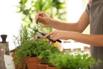 Des plantes aromatiques cultivées dans un espace dédié dans le jardin