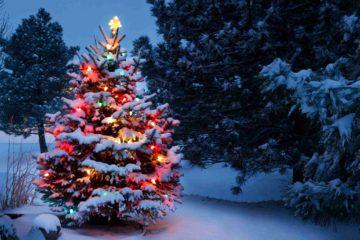 Un sapin de Noël en extérieur dans un décor enneigé