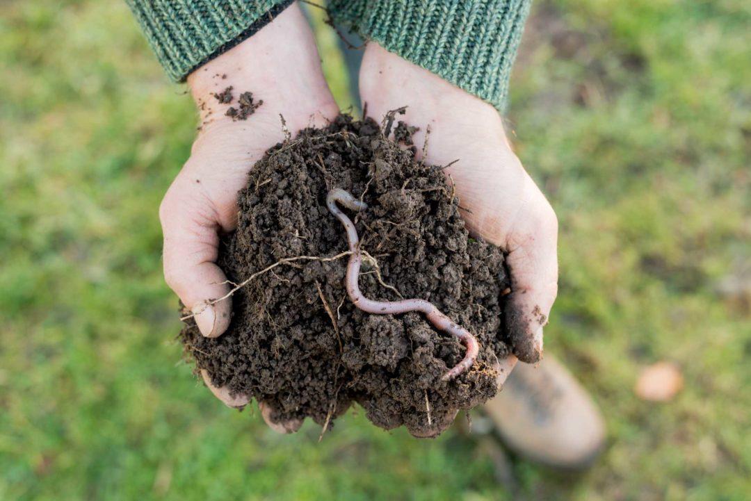 Une personne tient une motte de terre dans sa main avec un ver de terre