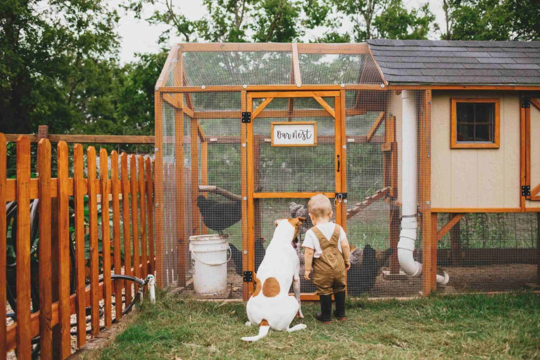 Un enfant et son chien observent des poules dans un grand poulailler