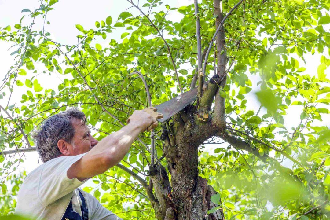 Un homme fait des travaux d'élagage sur un arbre