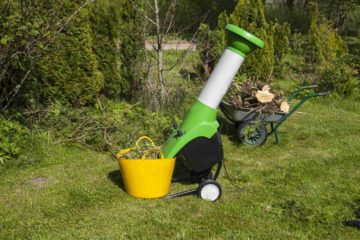 Un boyeur de végétaux dans un jardin