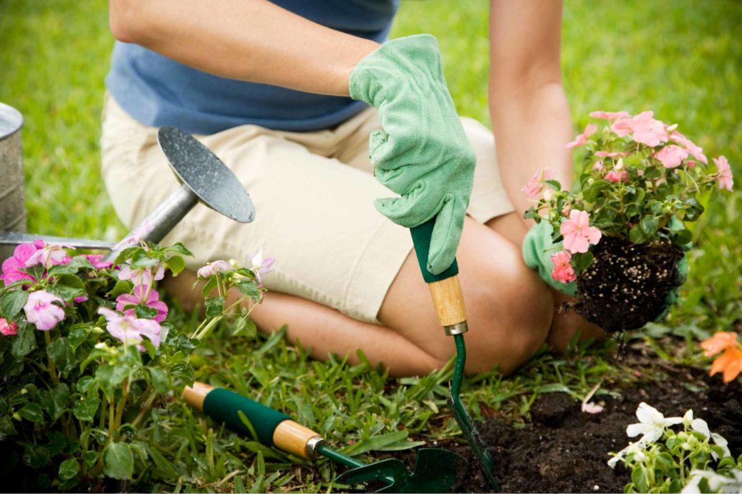 Une femme met en terre des fleurs dans un jardin