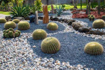 Un jardin paysager sec de style méditérranéen avec pierres, cactus