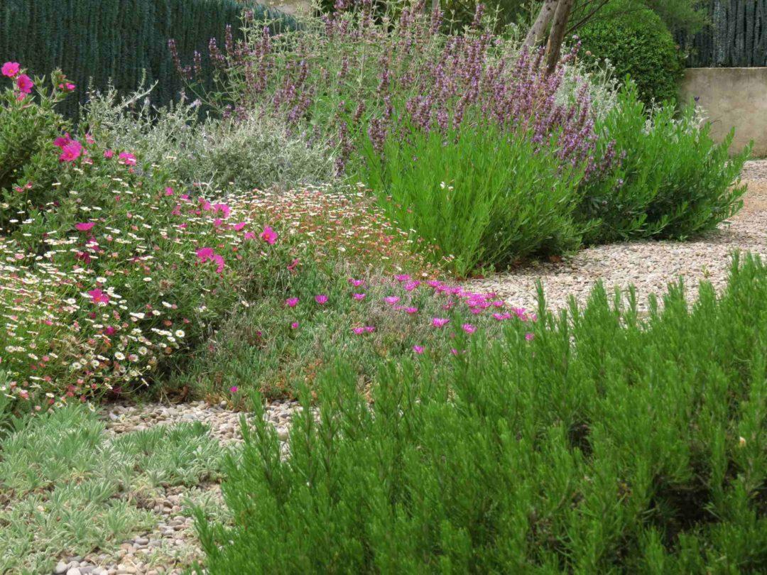 Un jardin paysager de type méditerranéen avec lavande, plantes grasses et graviers