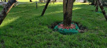 Un arbre en cours de transplatantion pour être déplacé