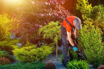 Un professionnel des jardins (architecte paysagiste) en plein travail dans un jardin