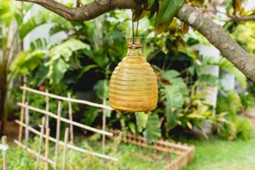 Un piège à insectes volants installé dans un jardin