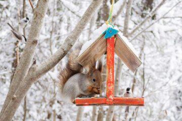 Un nichoir dans un jardin privé pour nourrir les animaux pendant l'hiver