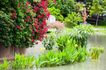 Un jardin fleuri inondé après de fortes pluies