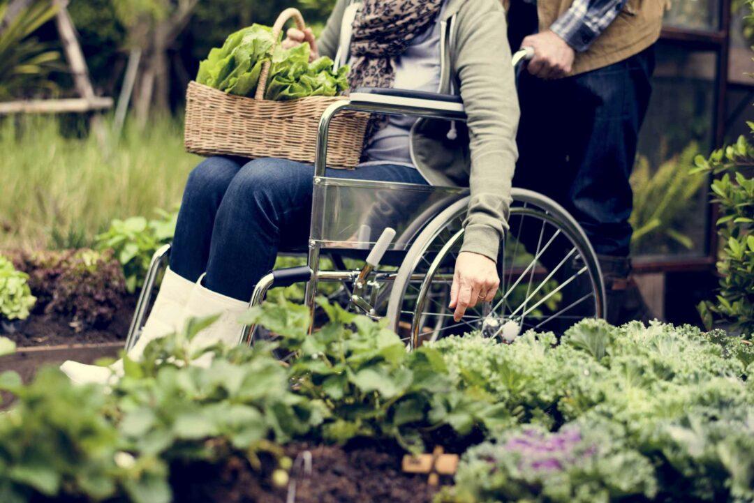Une personne en fauteuil roulant dans un jardin potager
