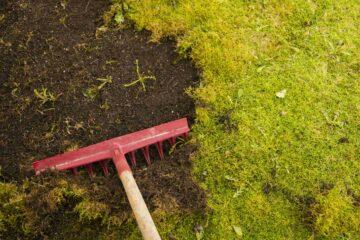 Un rateau pour éliminer mauvaises et moursse sur une pelouse