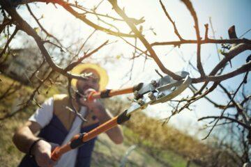 Un jardinier taille des arbres à l'aide d'un sécateur