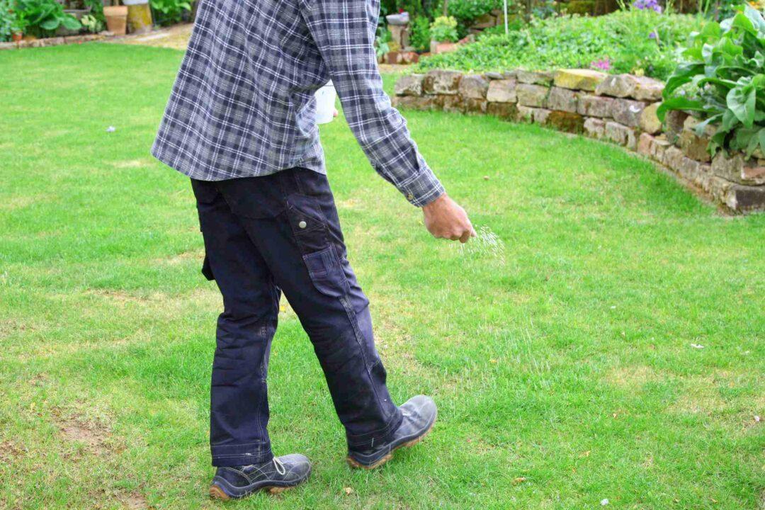Un jardinier sème des plants pour réparer une pelouse abîmée
