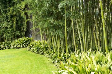 Des bambous plnatés en bordure d'un jardin exotique