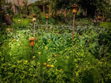 Un jardin nourricière avec fleur et potager