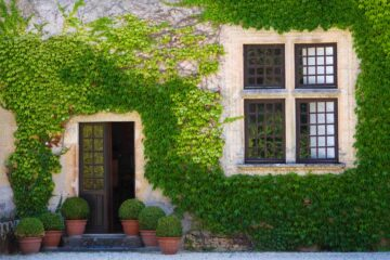 Un lierre recouvre la façade d'une belle maison ancienne