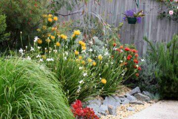 Un exemple de jardin australien avec plantes et fleurs adaptées