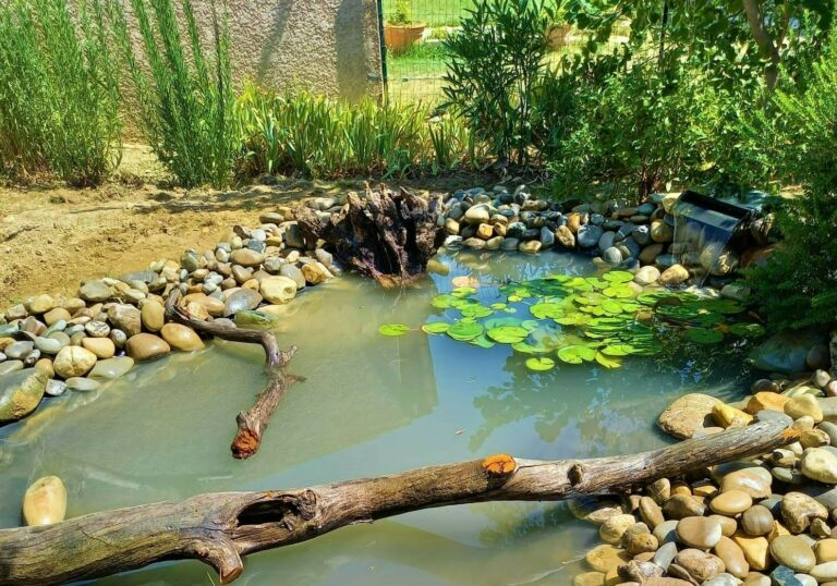 Le bassin naturel entouré de galets